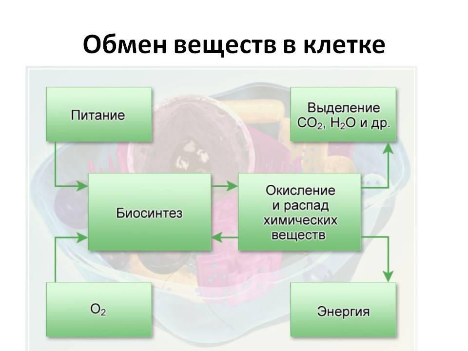 Обмен веществ в клетке схема.